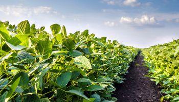 Se conocieron los datos del Crop Tour y la soja responde con fuertes subas