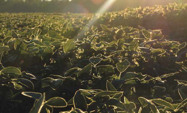 Factor alcista: los anuncios de compras chinas de soja dan soporte a los precios de la oleaginosa.