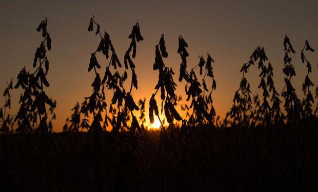 En esta campaña, la baja proteína de la soja podría llevar a U$S 674 millones las pérdidas para Argentina.