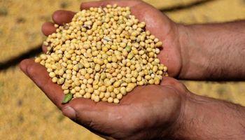El precio de la soja volvió a caer en Chicago pero logró mantenerse en Rosario