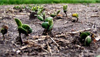 Oportunas lluvias para terminar la soja