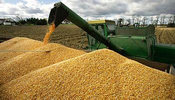 La pelea por mejorar la calidad de la soja