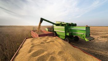 La soja avanza en Chicago frente a temores por recortes en la cosecha de Sudamérica