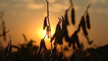 Importantes subas para la soja, el trigo y el maíz en Chicago