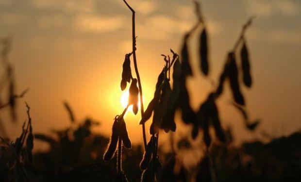 La soja rebota tras la caída de ayer.
