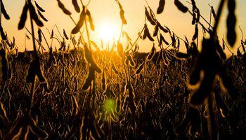 La venta de soja y maíz de la nueva campaña se encuentra adelantada en un 132 y 153%