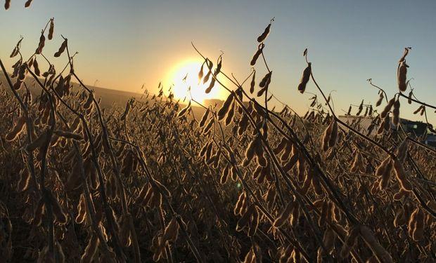 La soja cayó a mínimos de más de 10 años.