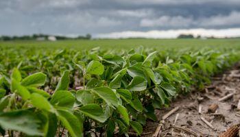 Productores comercializaron apenas un 10% de la soja de la nueva campaña