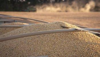 Negativo para el precio de la soja: no hay señales de China y avanza la cosecha en Brasil