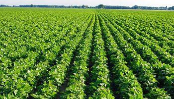De qué se trata la Política de Soja Sostenible para América del Sur que lanzó Cargill