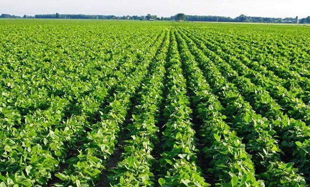 Cargill ha delineado un enfoque completo de cadenas de suministro totalmente sostenibles de soja, cocoa y palma.