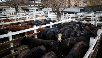 Liniers: precios sostenidos en lotes de vaca por la demanda exportadora