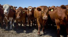 Carne: a 15 años del último cierre de exportaciones, recuerdan que se perdieron 11 millones de cabezas del stock ganadero