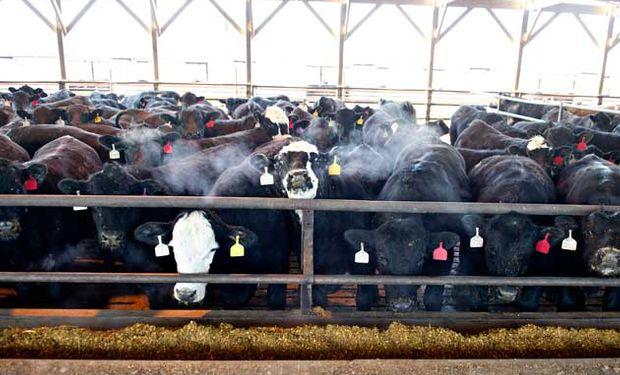 Aumentó un 1,3% interanual el stock bovino