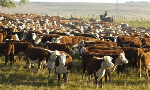 Uruguay: el stock ganadero es el mayor de la historia.