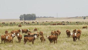 Datos del stock ganadero encienden luces amarillas en Uruguay