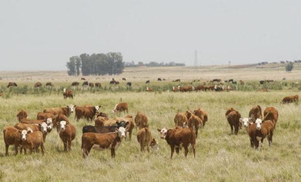URUGUAY. Población de vacunos y ovinos a 2015 da varias advertencias.
