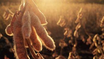 Factores a tener en cuenta luego de las subas para la soja