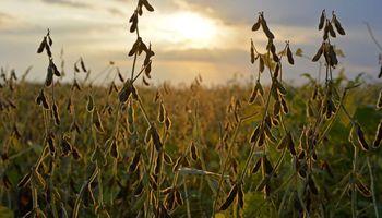 Fuertes subas para la soja: se encamina a un máximo de seis años en Chicago