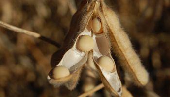 Cinco subas en las últimas seis ruedas para la soja en Chicago