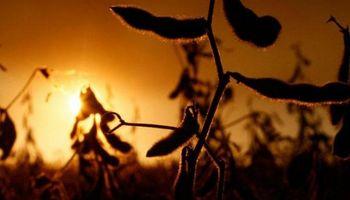 Chicago: la soja regresa al terreno positivo