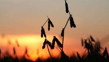 Fuertes subas: la soja alcanzó un máximo de 6 meses