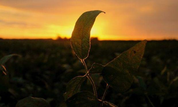 En el mercado local, para los valores contractuales, la soja finalizó con un incremento, el trigo con bajas y el maíz se mantuvo a la par.