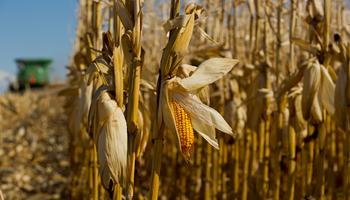 La soja quedó cerca de los US$ 525 y el maíz subió más de un 5%: cómo impactó en Rosario