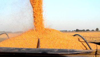 Quiere debatir la OMC el fin de subsidios agrícolas