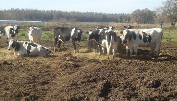 Séptimo mes del subsidio agrícola para los tambos