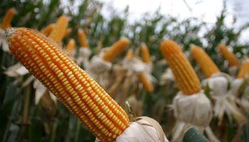 Subsidios agrícolas: el Gobierno negocia plan de trabajo en la OMC