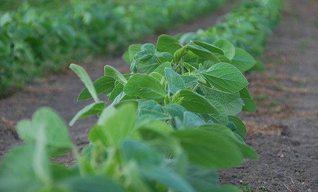 SOJA. En Brasil se ha plantado el 2,5% del territorio.