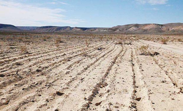 El principal problema que hoy presentan los suelos de la Región Pampeana es la fertilidad.
