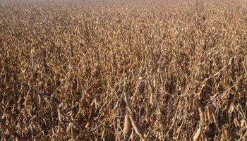 Suelos al limite condicionan el ritmo de cosecha