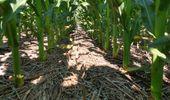 Con reservas de agua adecuadas para soja y maíz, la campaña sigue avanzando