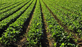 Un proyecto sustentable para la recuperación de suelos