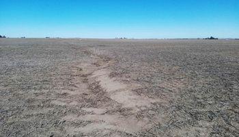 Los cultivos de cobertura aumentan en un 40 % la infiltración y mejoran la salud física del suelo