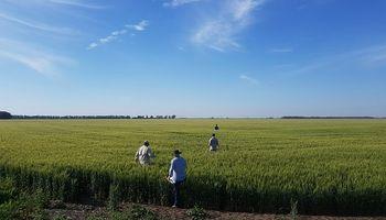 Malezas: el novedoso modo de acción que deja el lote listo para el trigo