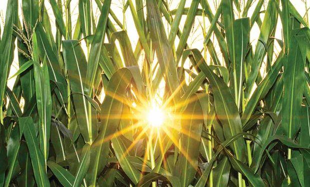 Buscan apoyar proyectos ligados a la generación de energía con un sentido amplio, lo que incluye la producción de alimentos.