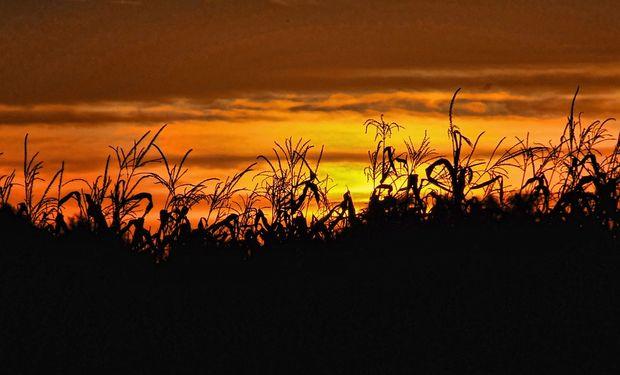 El maíz busca acompañar las subas del petróleo y la soja recibe una señal positiva de Malasia
