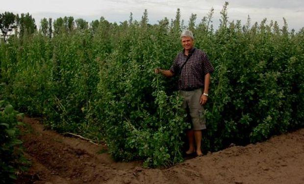 """El """"súper cereal"""" que busca ganar un lugar en los planteos agrícolas"""