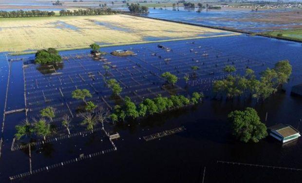 En la actualidad habría 93 mil hectáreas con agua en la superficie.