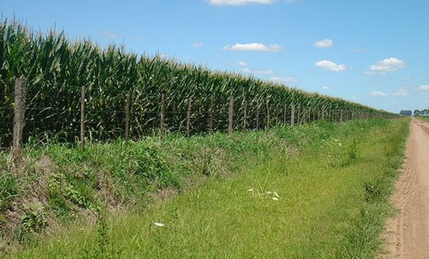 Lo que se espera pasa por una superficie de maíz que bajaría, mientras que la de soja se mantendría similar o subiría.