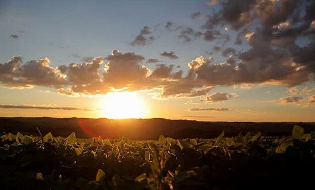 La nueva campaña de soja va por 19,6 millones de hectáreas.