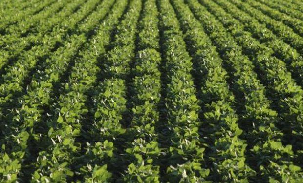 Cubriría 19,6 millones de hectáreas según la BCBA y la BCR.