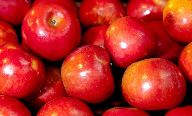 La decisión brasileña de suspender la importación de peras, manzanas y membrillos sorprendió a las autoridades nacionales dado que no hubo una comunicación previa. Fuente: MAGyP.
