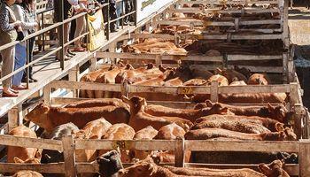 Córdoba habilitó remates y ferias de animales con la implementación de protocolo