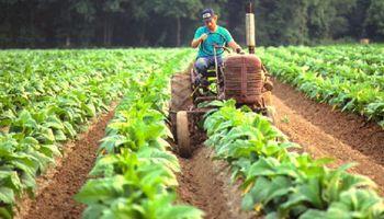Economías regionales: peras, manzanas y tabaco en estado de crisis, según Coninagro