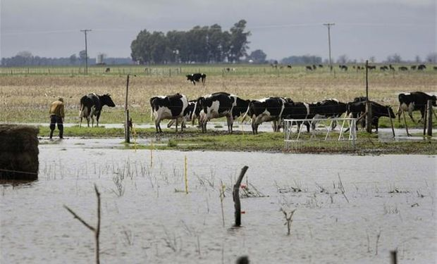 Recomiendan tratar de que los animales permanezcan la mayor cantidad del tiempo en las parcelas de pastoreo para disminuir la concentración de bosta en los corrales y callejones.