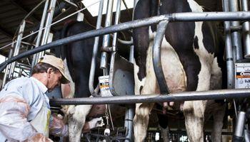 La quita de retenciones al maíz empeoró el sector lechero